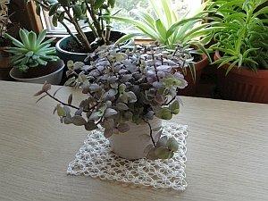 My little plant sitting on the thread mat